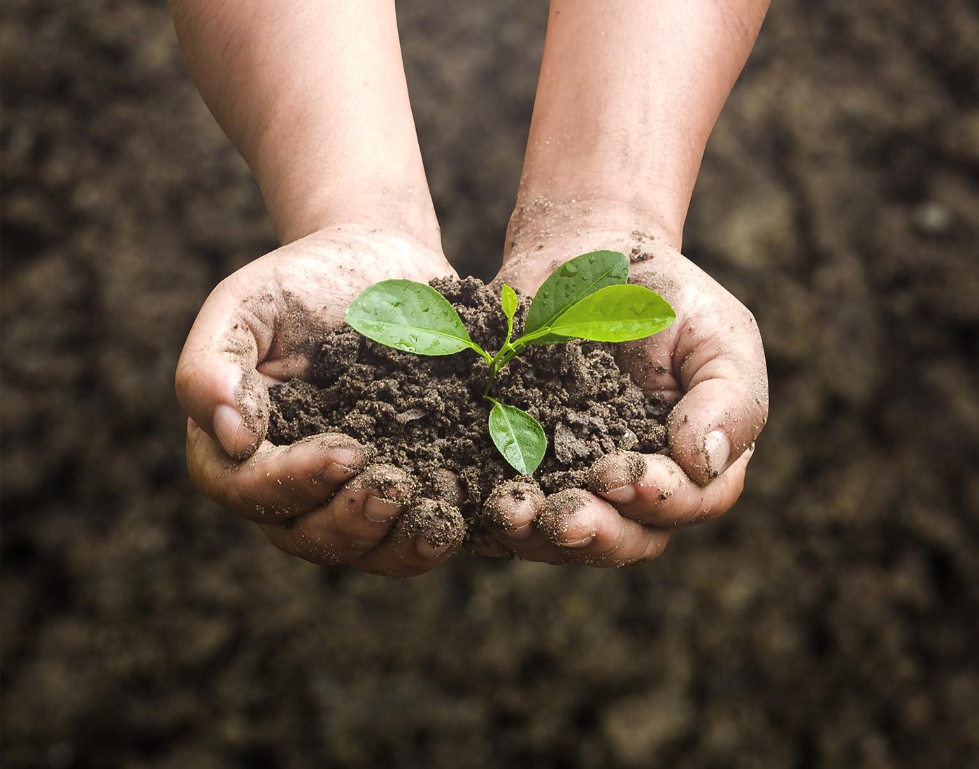 Environmental Awareness » OMS